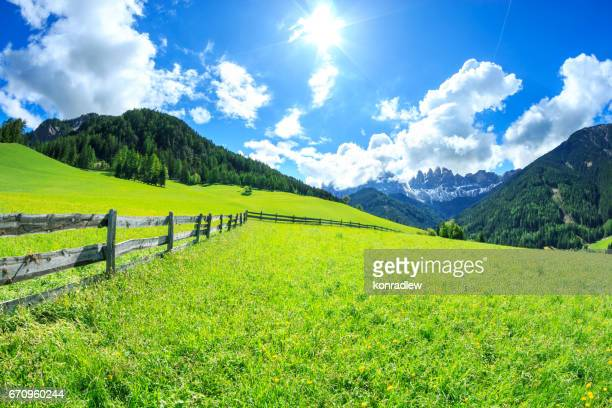 Alpen Landscape -  Green field and Sunny Blue Sky - Spring meadow