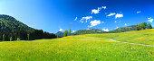 alpen landscape green field meadow full