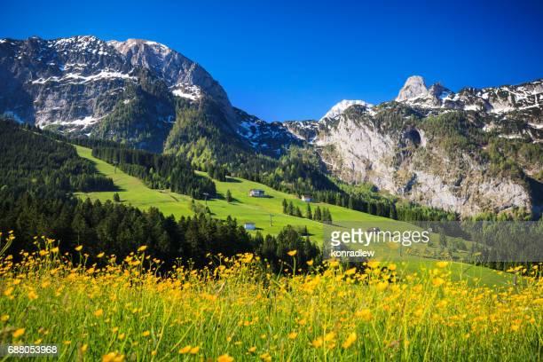 Alpen paysage - champ de vert pré plein de fleurs de printemps - mise au point sélective (pour point focal différents consultez les autres images de la série)