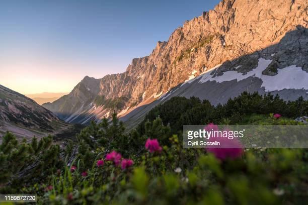 alpenglow at mt. rotwandlspitze and mt. steinkarlspitze - wildnis stock-fotos und bilder