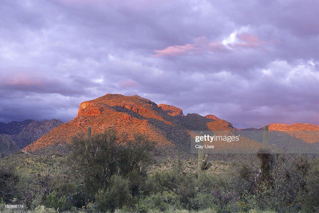Alpenglow at Sabino Canyon : Stock Photo