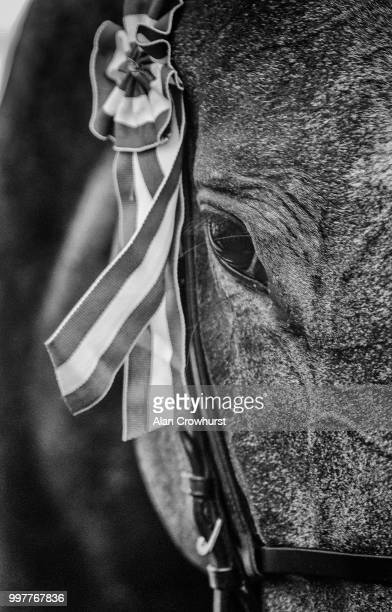 Alpha Centauri after winning The Tattersalls Falmouth Stakes at Newmarket Racecourse on July 13 2018 in Newmarket United Kingdom