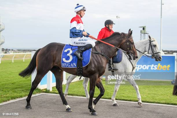 Alpha ridden by Beau Mertens returns after winning the RC Asphalt Maiden Plate at Racingcom Park Racecourse on February 15 2018 in Pakenham Australia