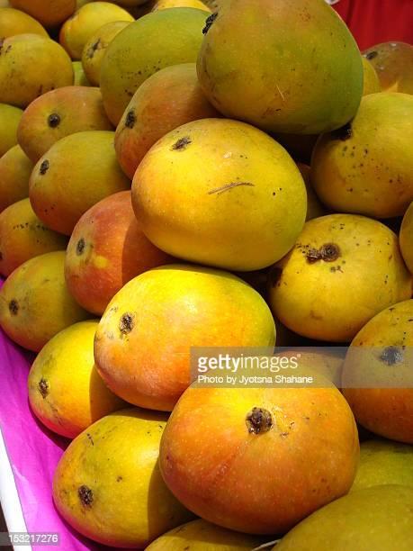 alphonso hapus mango picture