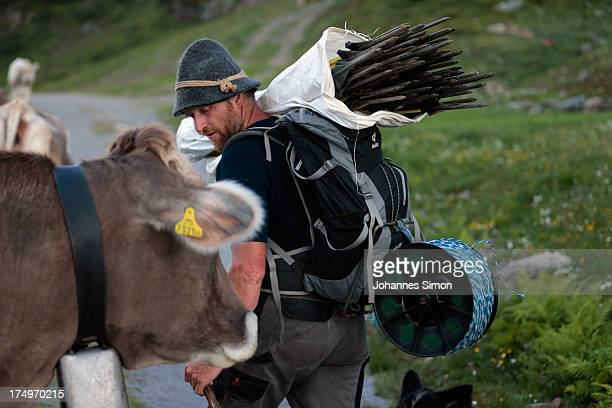Alpine cattle herder Martin Riedmann caries fences to a meadow near alpine dairy Alpe Albona in the Vorarlberg mountain range of western Tyrol on...