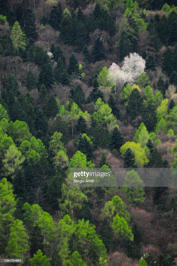 Alpine forest trees : Stock Photo