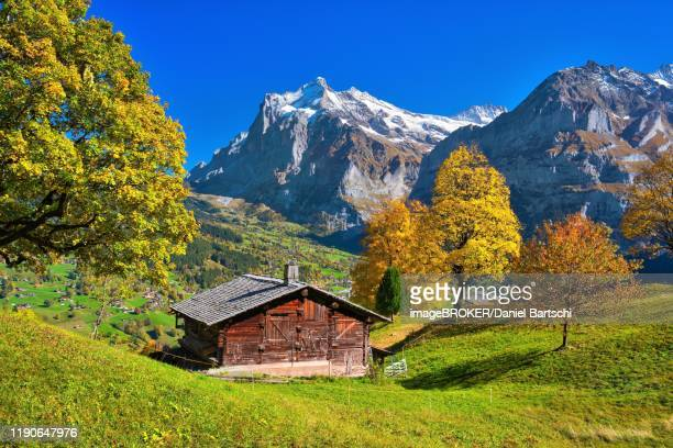 alpine hut above grindelwald, mt wetterhorn at the back, grindelwald, canton of bern, switzerland - hut stock pictures, royalty-free photos & images