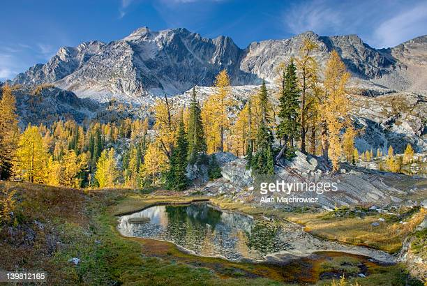 Alpine larches (Larix lyallii) and tarn below Mount Monica 3072 m (10079 ft), Purcell Mountains, British Columbia, Canada