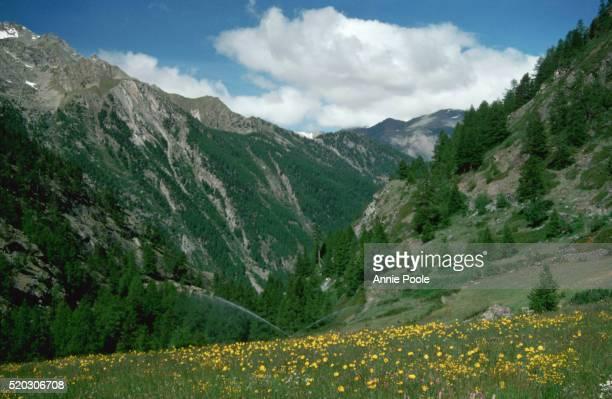 alpine meadow in italian mountains - parco nazionale del gran paradiso foto e immagini stock