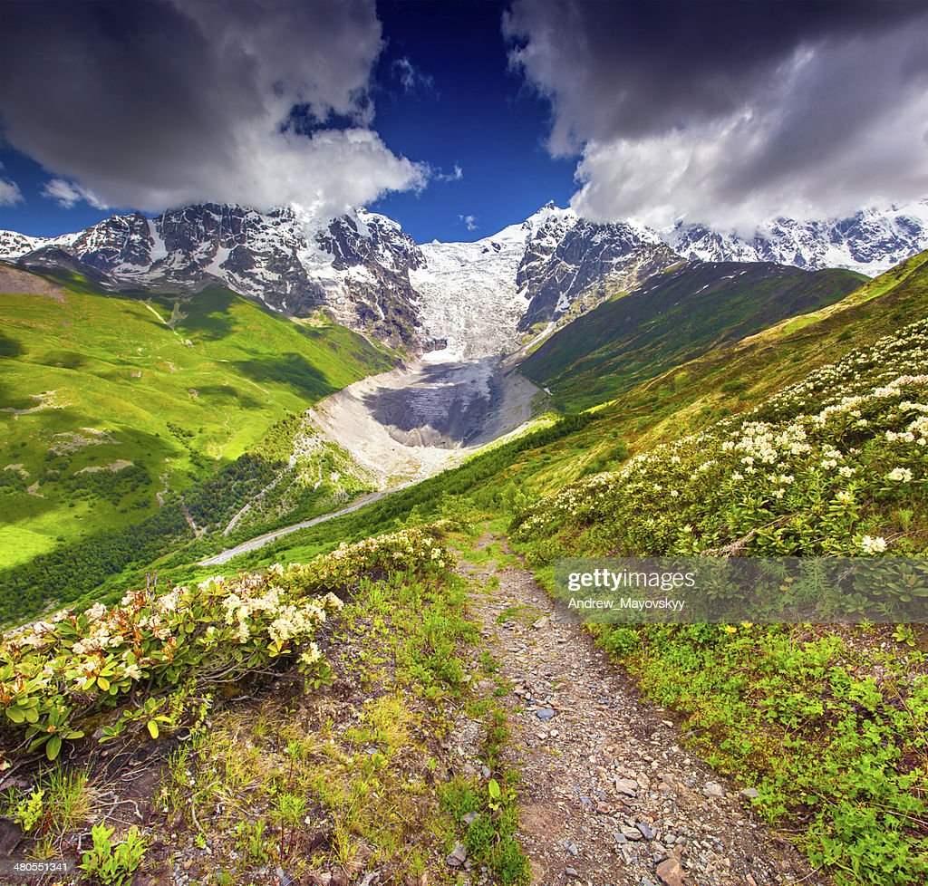 Alpine meadows at the foot of Tetnuldi glacier, Chkhutnieri pass : Stock Photo