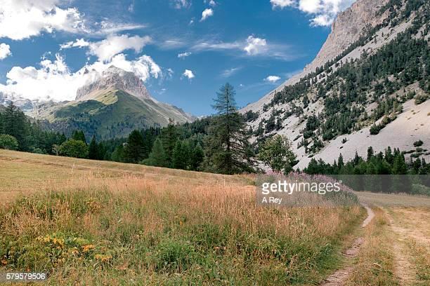 alpine path - バルドネキア ストックフォトと画像