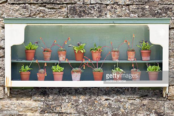 alpine plants - andrew dernie stock pictures, royalty-free photos & images