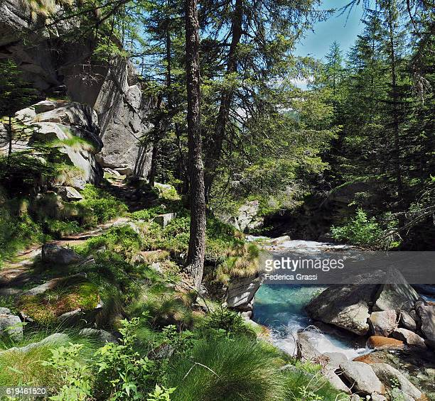 Alpine Stream And Hiking Trail  In The Natural Park Of The High Antrona Valley