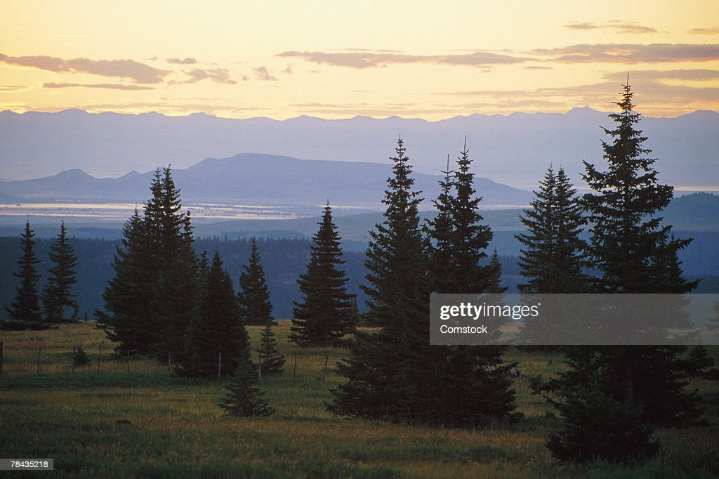 Alpine trees in San Juan Mountains in Colorado : Stockfoto