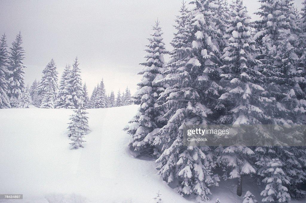 Alpine wilderness during a snowfall : Stockfoto