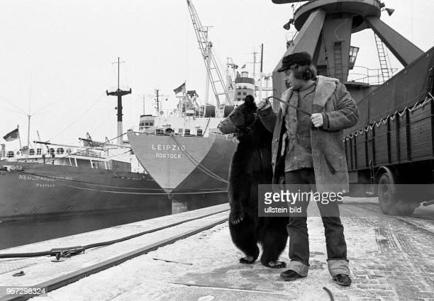 Als ungewöhnliche Passagiere gingen acht Braunbären vom Staatszirkus der CSSR im Seehafen Rostock an Bord des DDRFrachters Leipzig aufgenommen am Für...