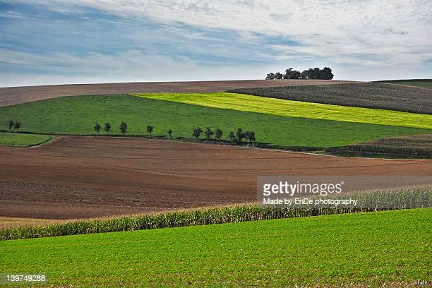 Alsatian landscape