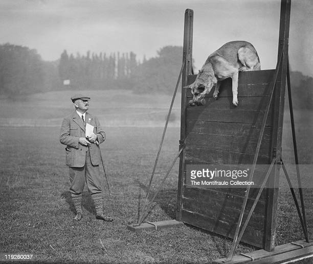 Alsation Rolfes Bruno jumping a high trial fence with a dumb bell in its jaw during the Alsation Police and Army Sheep Dog Trials at Crystal Palace,...