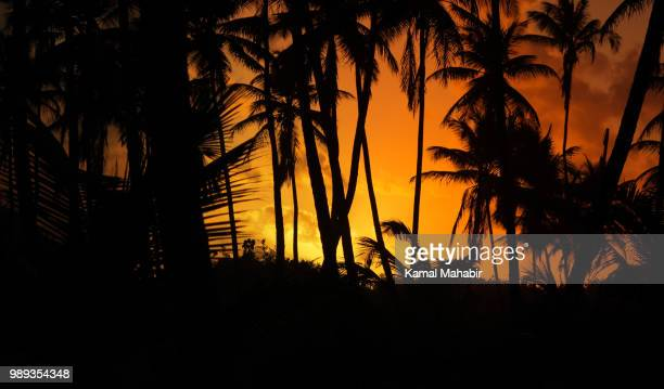 also, a caribbean sunset - trinidad and tobago stock pictures, royalty-free photos & images