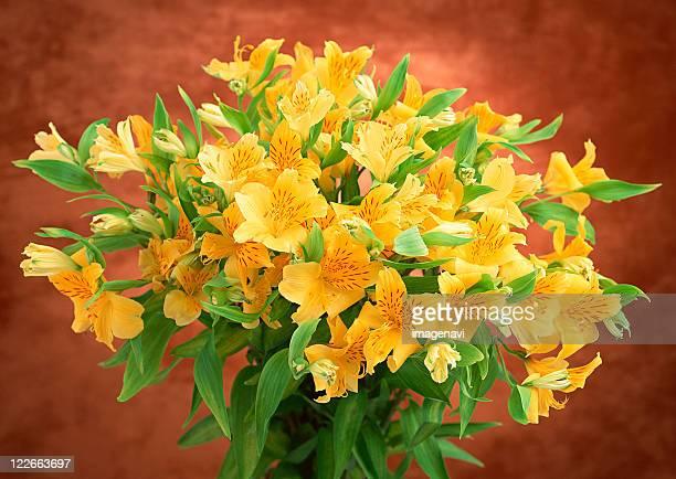 alstromeria - alstroemeria stock pictures, royalty-free photos & images