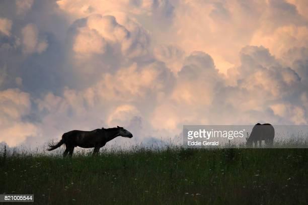 Altai Republic, Southern Siberia Russia, Russia
