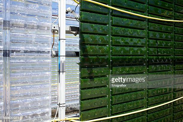 Alternative Energy: production of micro algae for regenerative power supply.