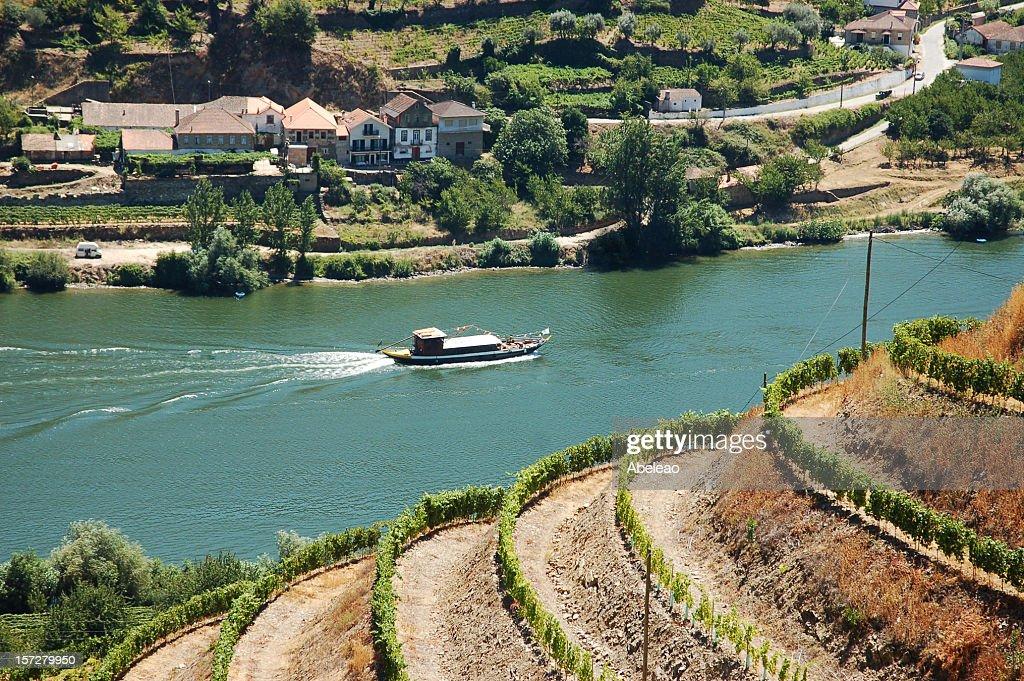 Alto Douro, Port Wine region : Stock Photo