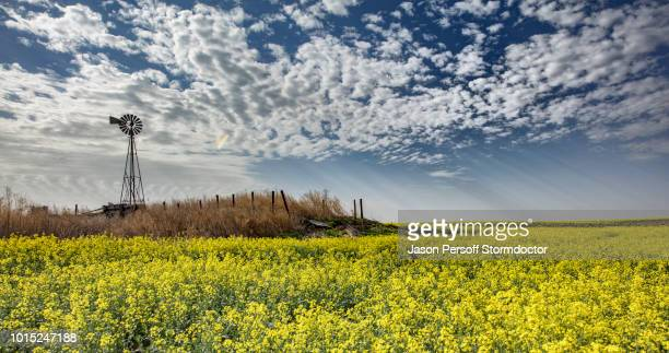 altocumulus and crepuscular rays over rapeseed field forecasting storm, hooker, oklahoma, us - オクラホマ州 ストックフォトと画像
