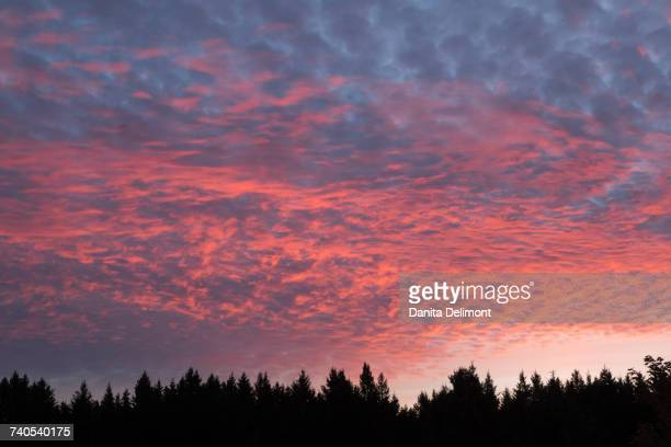 altocumulus clouds over forest at sunset, wisconsin, usa - iowa_county,_wisconsin stock pictures, royalty-free photos & images