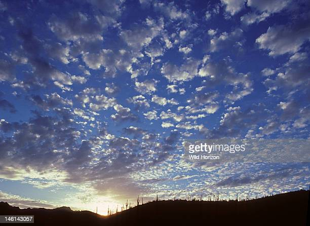 Altocumulus clouds over ridge studded with saguaro cacti Carnegiea gigantea Synonym Cereus giganteus Sonoran Desert Tucson Mountains Tucson Arizona...