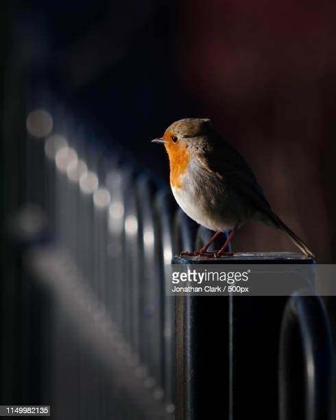 always watching - zangvogel stockfoto's en -beelden