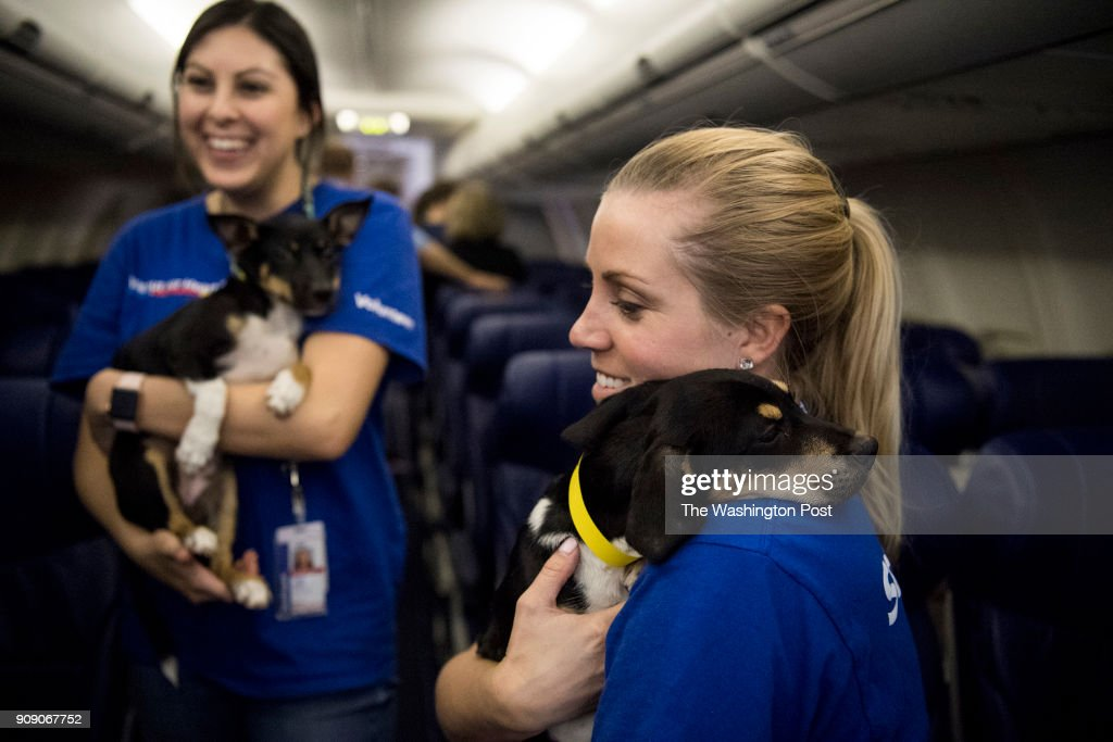 Alyssa Eliasen Holds A Puppy On A Southwest Airlines Flight Between