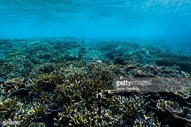 The surface of a hard coral reef in shallow tropical seas.