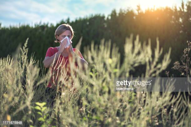 ich bin allergisch - ambrosia stock-fotos und bilder