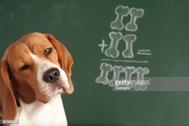 i am not sure - mathematics stock pictures, royalty-free photos & images