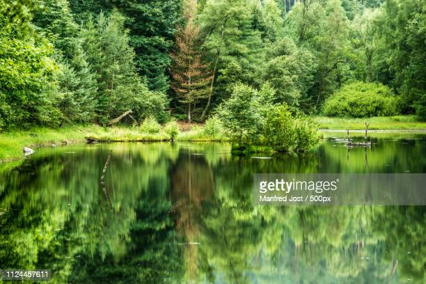 am ungeheuersee - spiegelung stock pictures, royalty-free photos & images