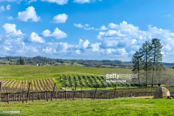 amador county wineries 9 - foothills stock pictures, royalty-free photos & images