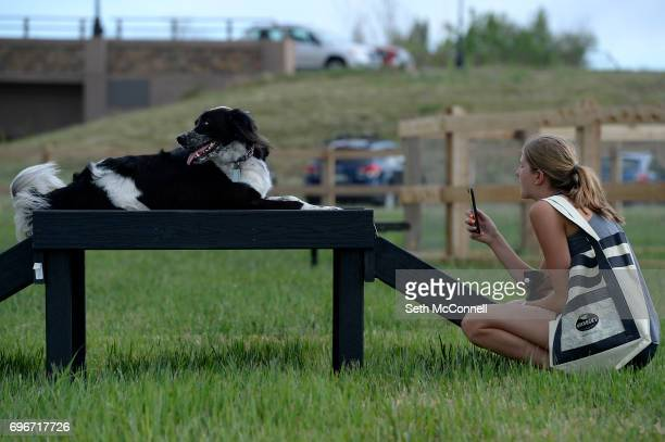 Amanda Morris tries to get her dog Maverick's attention for a photo at USMC CPL David M Sonka Dog Park on June 14 in Parker Colorado The Town of...