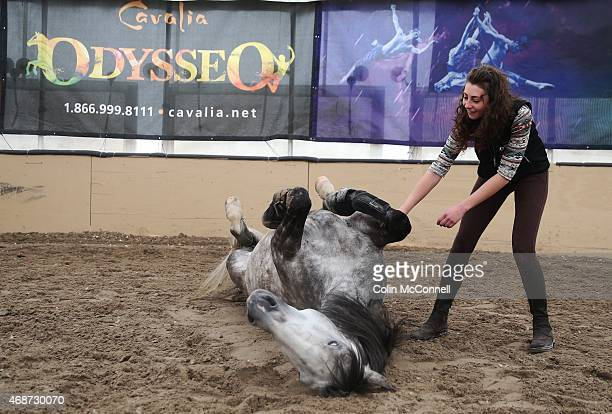 TORONTO ON MARCH 30 Amanda Orlowski does tricks with Diamante a 7 yr old Gelding A behind the scenes feature on Odysseothe new version of the...