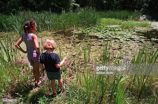 Amanda Seales Brockton left and her friend Emily Lamplough Stoughton scan the marsh for turtles and bull frogs The Natural Resources Trust of Easton...