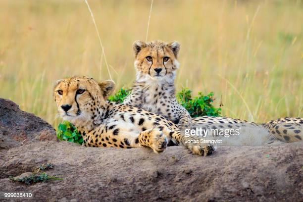Amani and cub