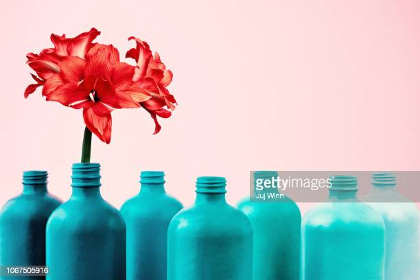 amaryllis in painted bottle vase - amaryllis stock pictures, royalty-free photos & images