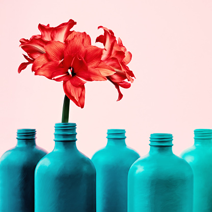 Amaryllis in painted bottle vase - gettyimageskorea