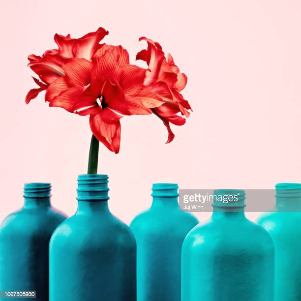 Amaryllis in painted bottle vase
