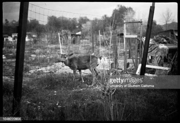 Amateur negatives Sun Valley, 18 March 1952. .Sun Valley; Los Angeles; California; USA.