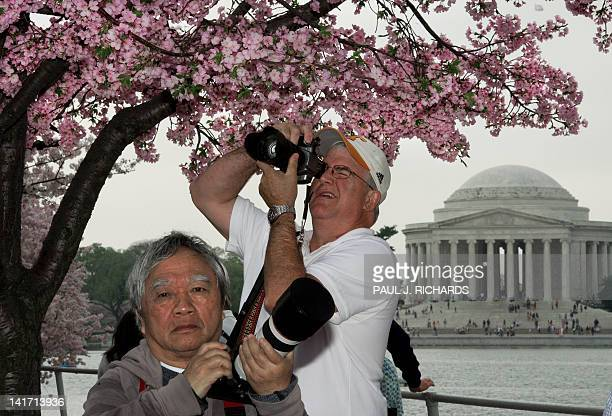 Amature photographers jockey for angles of Cherry trees during the 2012 Cherry Blossom Festival at the Tidal Basin March 22 in Washington DC This...