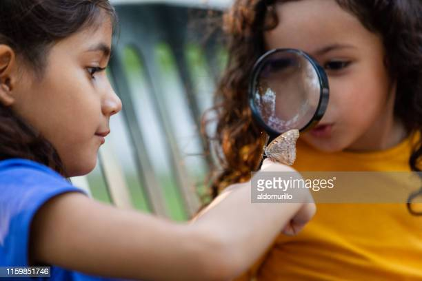 amazed little girl observing butterfly with a magnifying glass - invertebrate stock photos and pictures