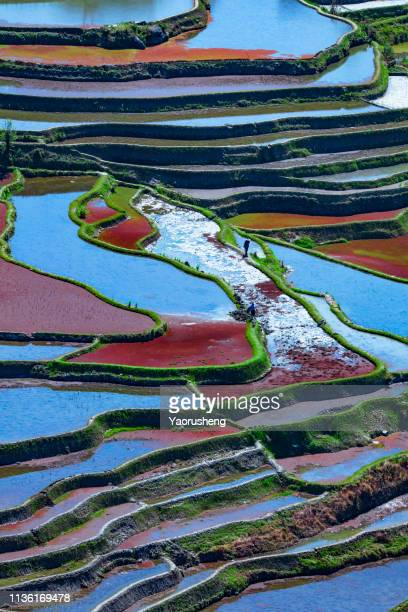 amazing abstract texture of yuanyang rice terraces fields with sky colorful reflection in water. yunnan province. china unesco heritage - terrassenfeld stock-fotos und bilder