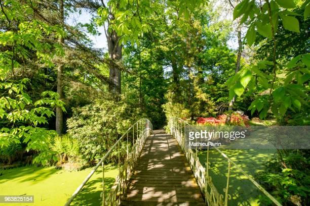 amazing balaine arboretum in bourgogne - allier stock photos and pictures
