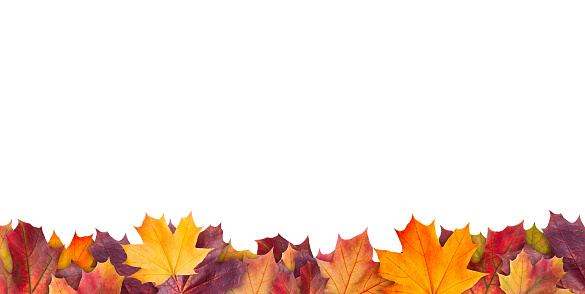 Amazing colorful background of autumn maple tree leaves background with white empty space. Multicolor maple leaves autumn background. High quality resolution picture 1163602734